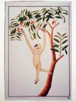 White-handed Gibbon Reproduction (1803-1818), William Farquhar, Watercolour on paper