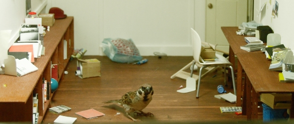 A Sparrow in the Studio (2008-2009), nofearsam921, Video